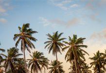 Bürgerabstimmung - Palmen dürfen stehen bleiben