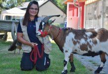 Annika Niemann ist die neue Tierheimleiterin