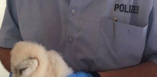 Junge Eule zu Gast bei der Polizei in Dorsten