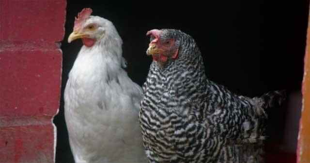 Tierschutzverein Dorsten