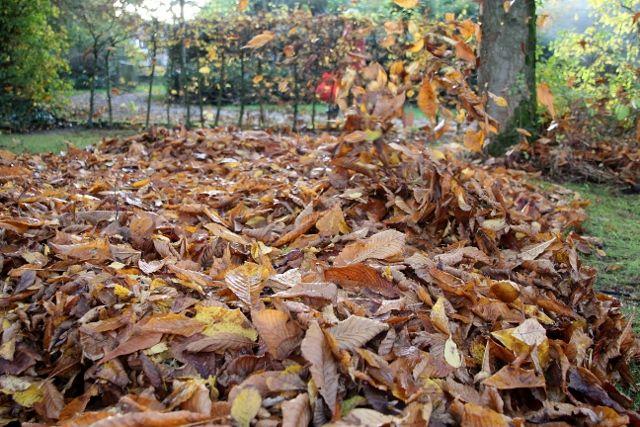 Herbstlaub-Foto-