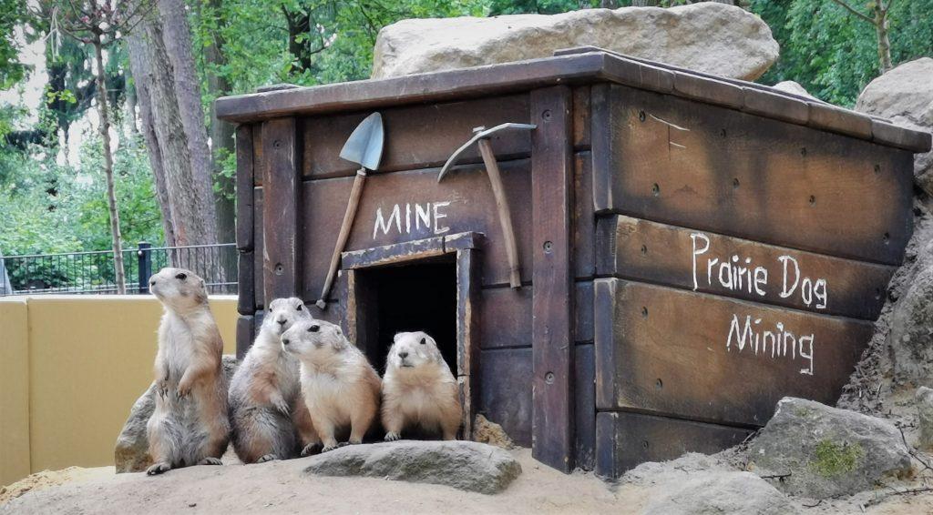Tiere im Wildpark Frankenhof.Foto: Marie-Therese Gewert