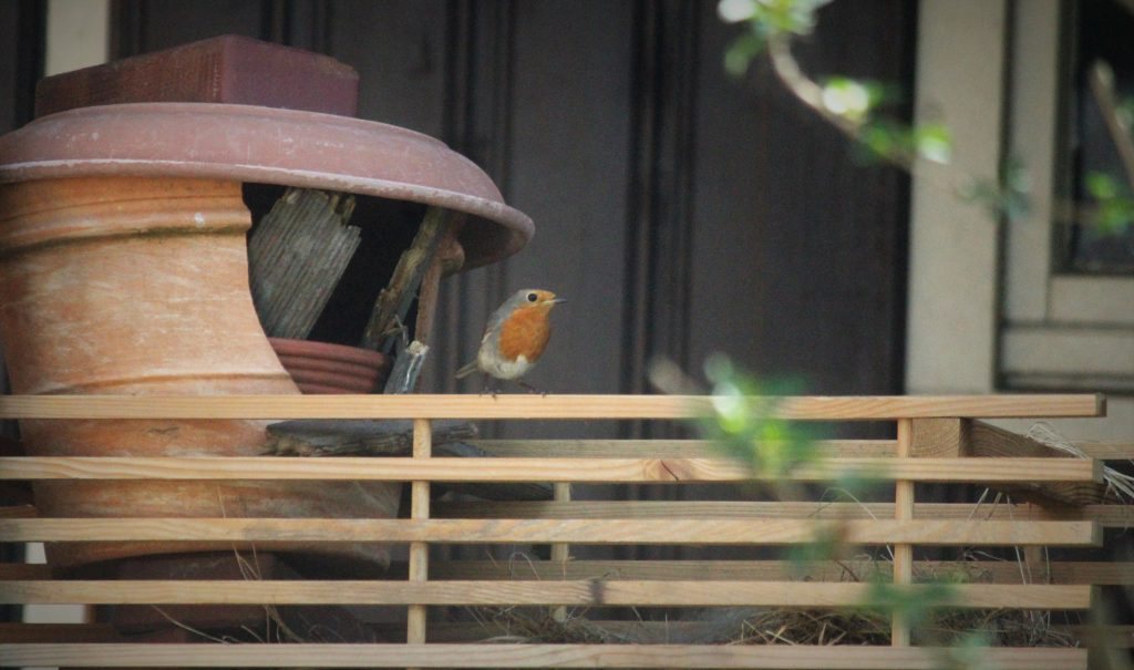 Rotkehlchen Rettung Selbstgebauter Notbehelf: Den Rotkehlchen scheint es zu gefallen. Um sie nicht zu stören, bin ich mit der Kamera nicht zu nah ans Nest gegangen.  Foto: Marie-Therese Gewert