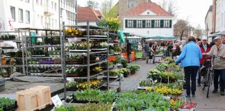 Dorstener Markt Altstadt