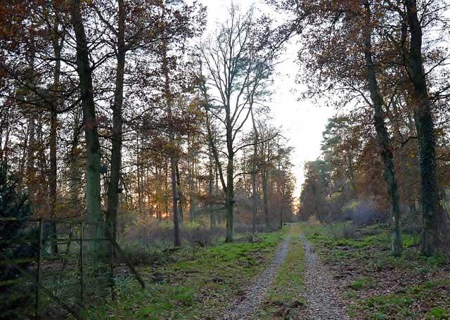 Naturpark Hohe Mark Raesfeld Dorsten