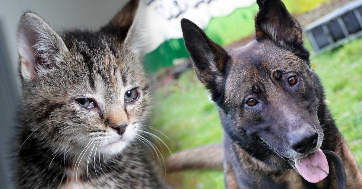 Tierheim Dorsten - Cassiopeia und Balu warten auf ein neues Zuhause