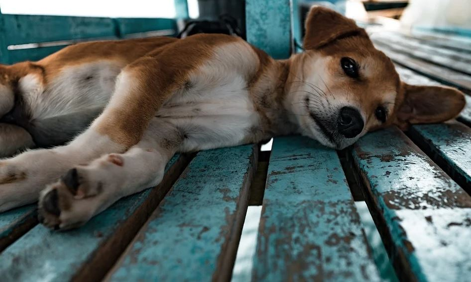 Online Tierhandel Tierwohl NRW