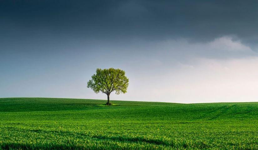 Bäume Klima Ruhrverband Paten
